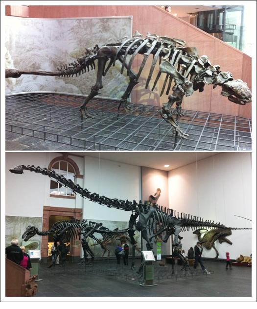 DinoSkeletons