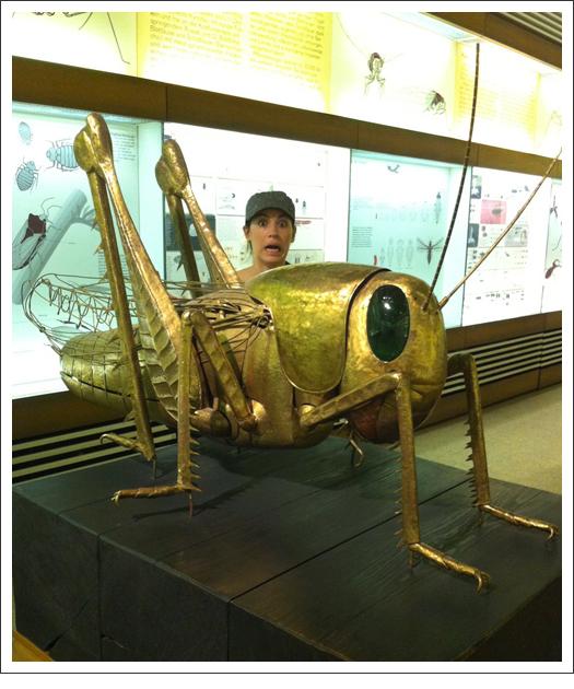GiantGrasshopper